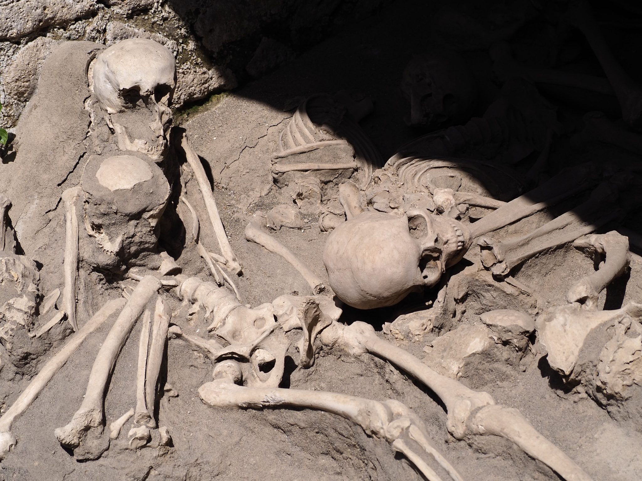 Adult & Child Skeletons