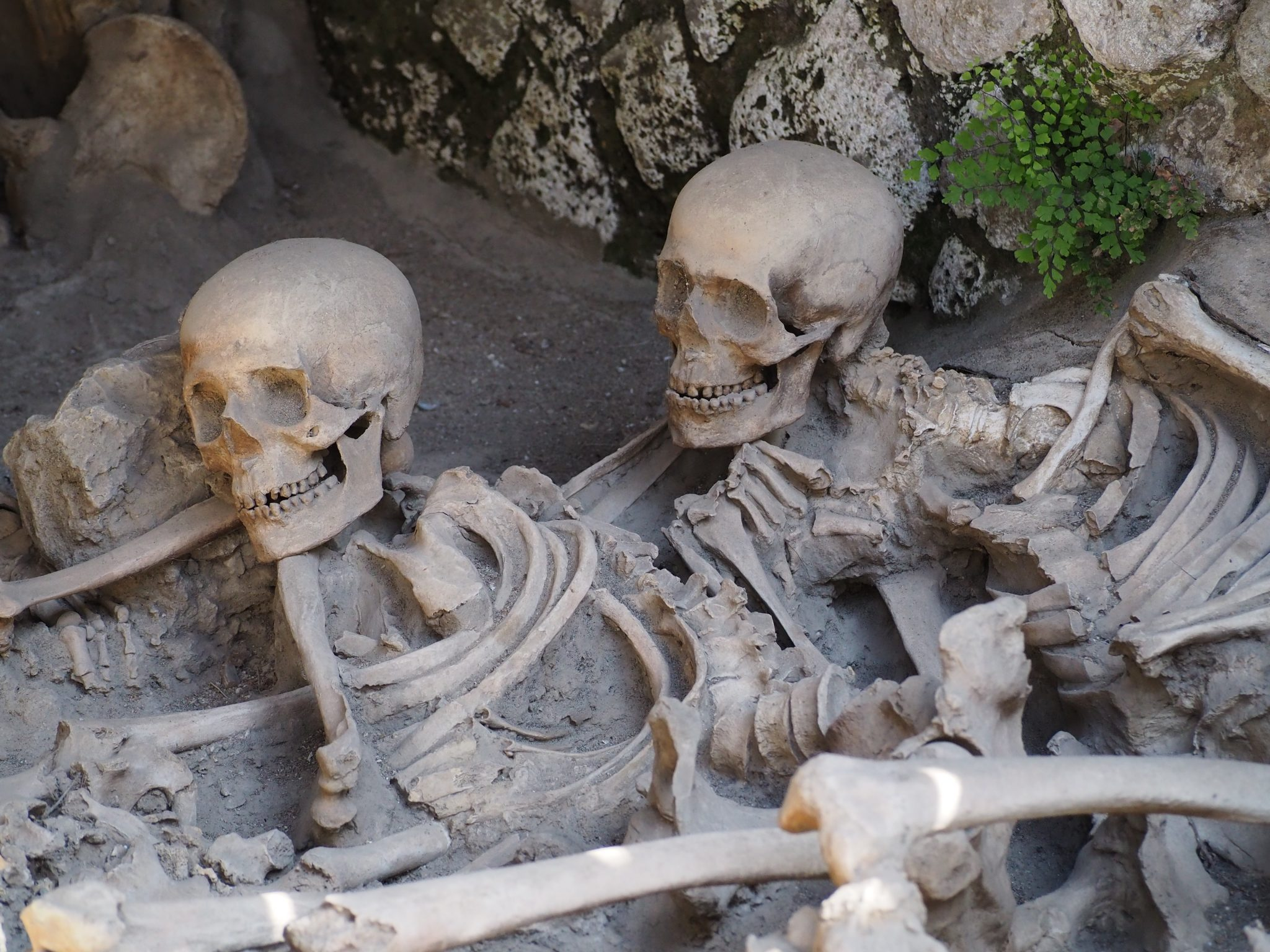 Skeletons Of Herculaneum